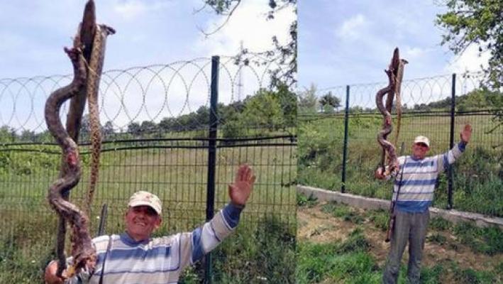 Bursa'da korku salan 5 metrelik yılan vuruldu, baş kısmı kaçmayı başardı