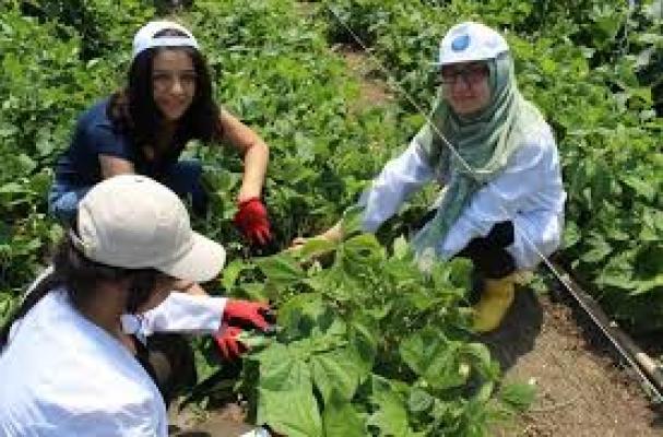 UÜ Ziraat Fakültesi öğrencileri, organik sebze yetiştiriyor
