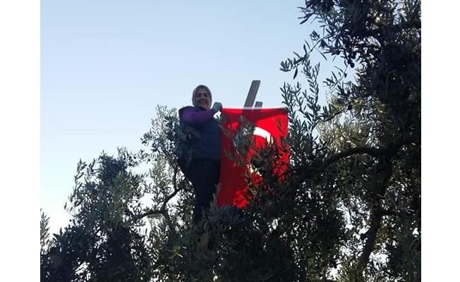 Bursa'da ağaç tepesinde Cumhuriyet kutlaması
