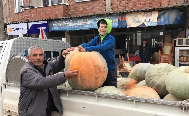 Bursa'da 75 kiloluk kabağı görenler şaşkına döndü