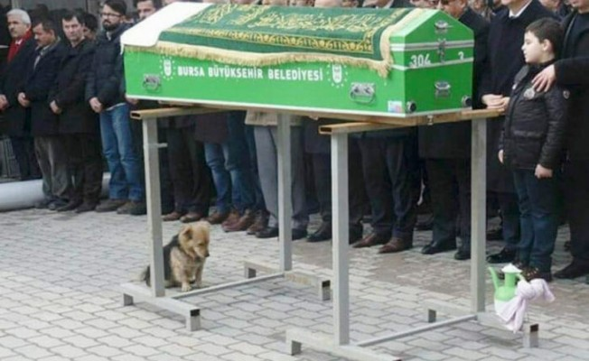 Tüm Bursa köpek Cesur'u konuşuyor!