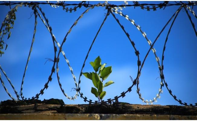 Dünyada ölüm cezaları yüzde 31 azaldı