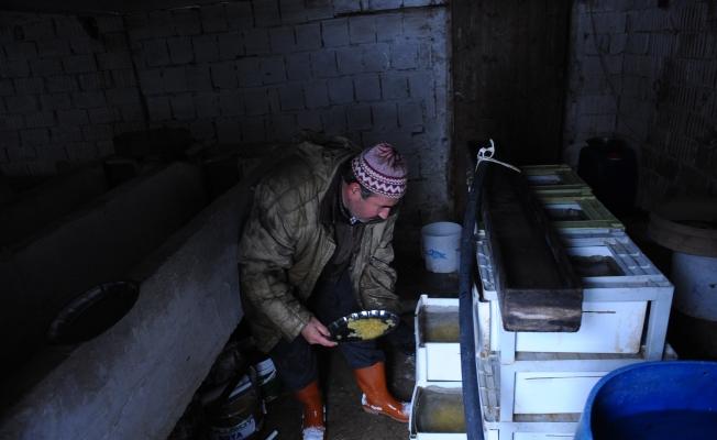 Uludağ'ın kar sularında yetişen alabalıklar iftar sofrasını süslüyor