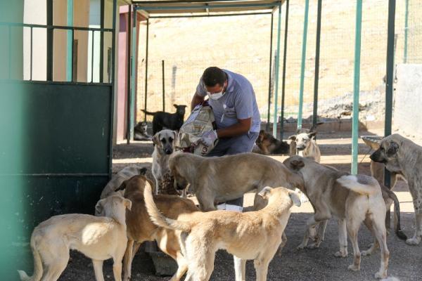 Mardin'de bir ayda 150 sokak hayvanı tedavi edildi