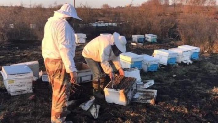 Çanakkale'de 30 arı kovanı yandı!