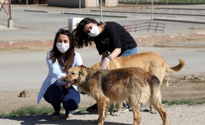 4 günlük kısıtlama öncesi sokak hayvanlarına mama ve su desteği