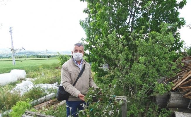Hisarcık'ta don ürünlere zarar verdi