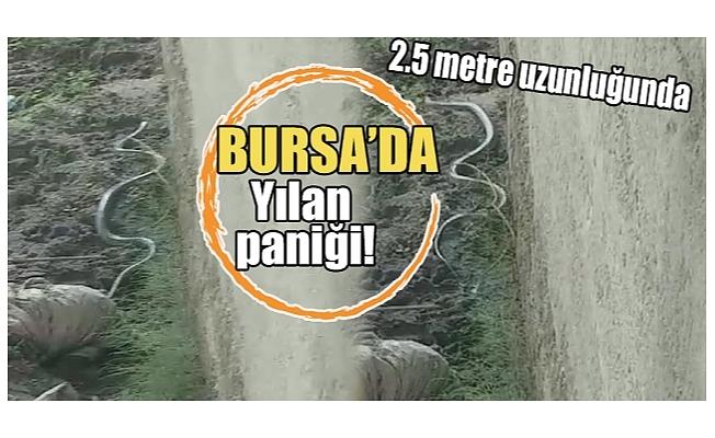 Bursa'da yılan paniği