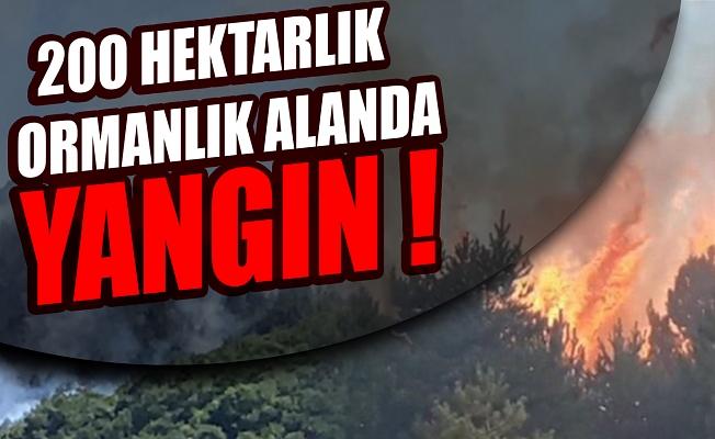 200 hektarlık ormanlık alanda yangın çıktı