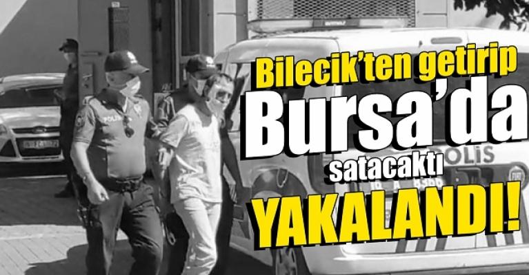 Bilecik'den Bursa'ya uyuşturucu getirirken yakalandı