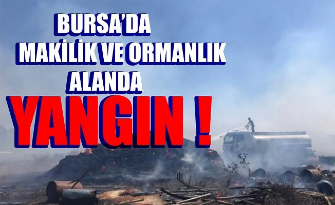 Bursa'da makilik ve ormanlık alanda yangın