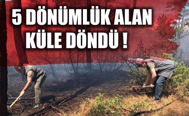 Bursa'da örtü yangınında 5 dönüm alan zarar gördü