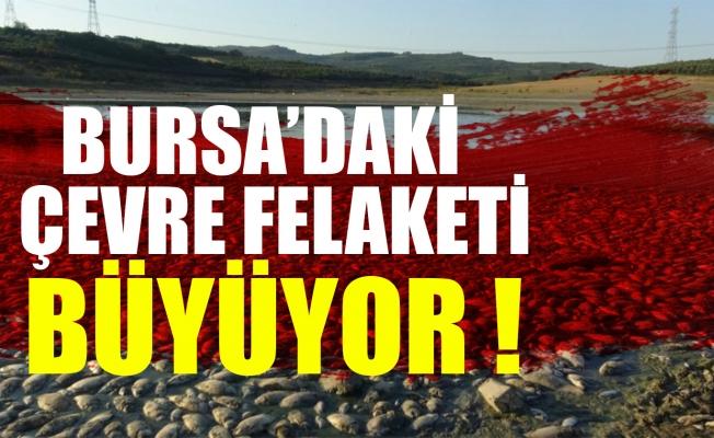 Bursa'da su iyice azaldı balık ölümleri katlandı!