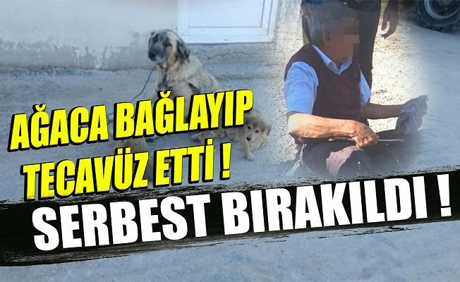 Köpeğe tecavüz edip, sahibine taş atan kişi, serbest bırakıldı!