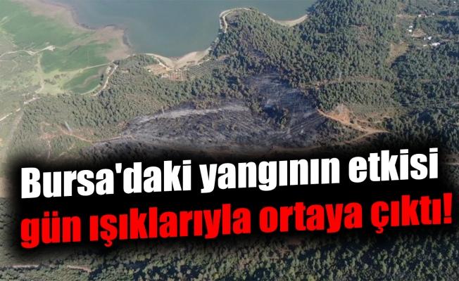 Bursa'daki yangının etkisi gün ışıklarıyla ortaya çıktı!