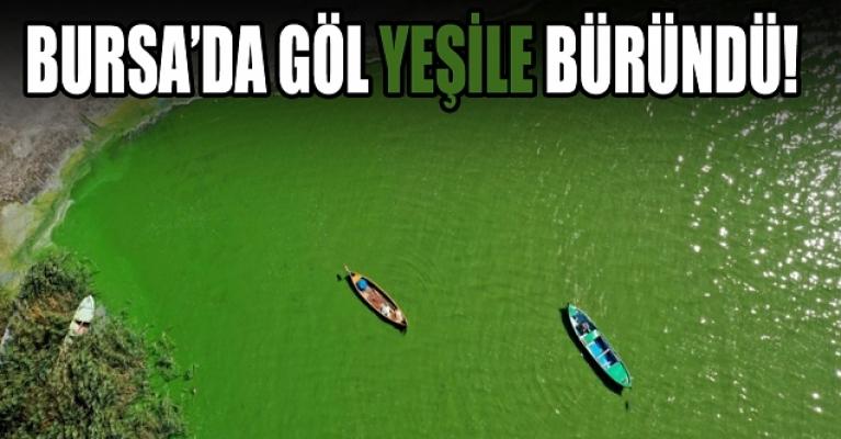 Bursa Uluabat Gölü yeşile boyandı