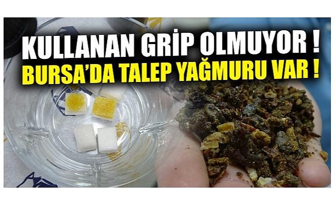 Bursa'da üniversitede üretilen propolisin litresi 2 bin 500 lira ama talebe yetişemiyor