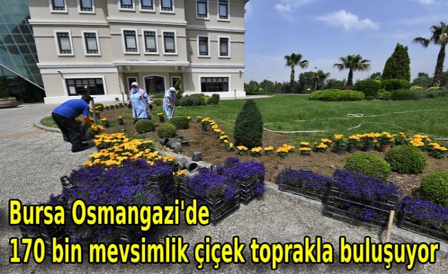 Bursa Osmangazi'de 170 bin mevsimlik çiçek toprakla buluşuyor
