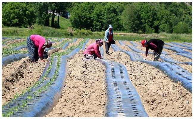 Köyünde 2,7 milyon liralık yatırımla tarıma başladı, 20 kadını istihdam etti