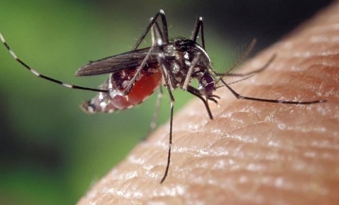 Sivrisinekler ortaya çıktı, Prof. Dr. Yılmaz uyardı