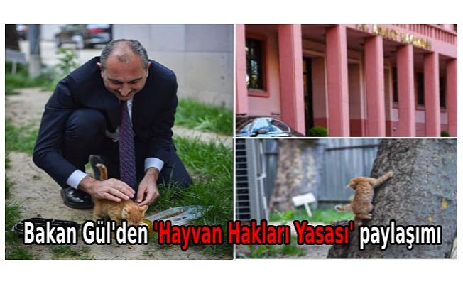 Bakan Gül'den 'Hayvan Hakları Yasası' paylaşımı