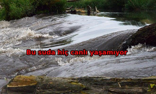 Marmara Denizi böyle kirleniyor