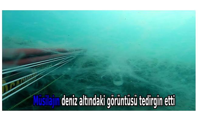 Müsilajın deniz altındaki görüntüsü tedirgin etti