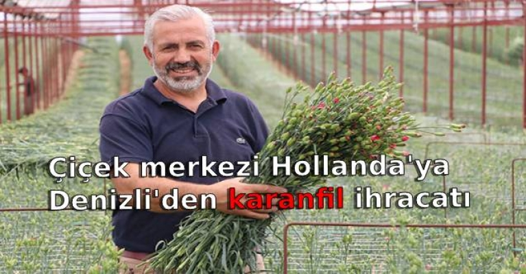 Avrupa'nın çiçek merkezi Hollanda'ya Denizli'den ihracat