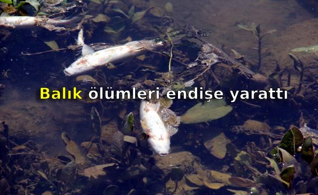 Balık ölümleri endişe yarattı