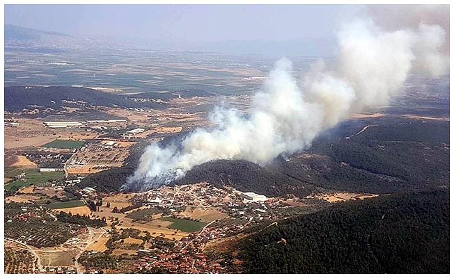 Foça'da orman yangını! Havadan ve karadan müdahale ediliyor