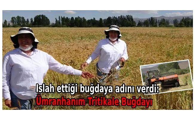 Islah ettiği buğdaya adını verdi: Ümranhanım Tritikale Buğdayı