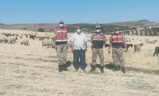 Kaybolan çoban ve sürüsü dronla bulundu