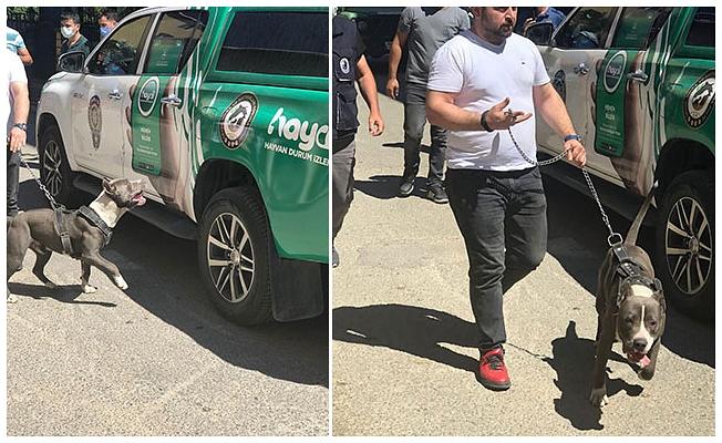 Pitbull dehşeti: 2 şüpheli adli kontrolle serbest