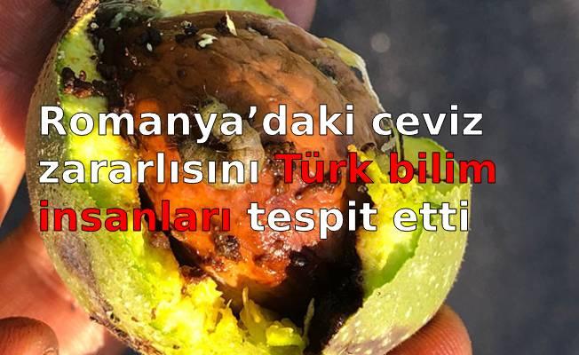 Romanya'daki ceviz zararlısını Türk bilim insanları tespit etti