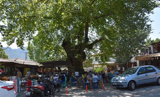 Tarihi çınar ağacı, 650 nüfuslu mahallenin ekonomisine katkı sağlıyor
