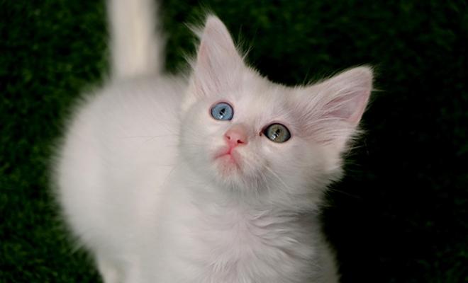 Van kedilerine 2 ayda 30 bin ziyaretçi