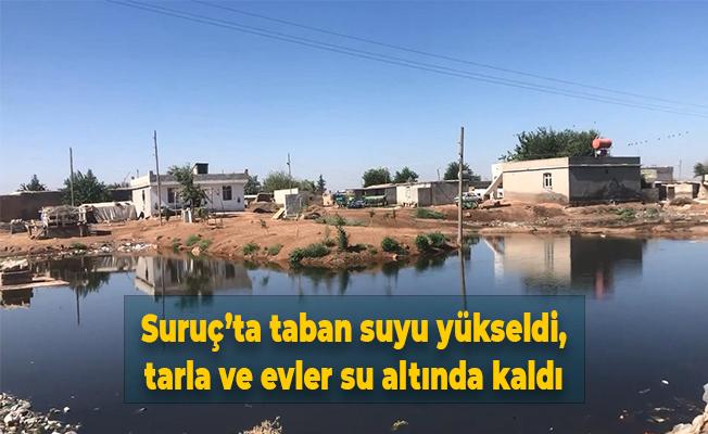 Suruç'ta taban suyu yükseldi, tarla ve evler su altında kaldı