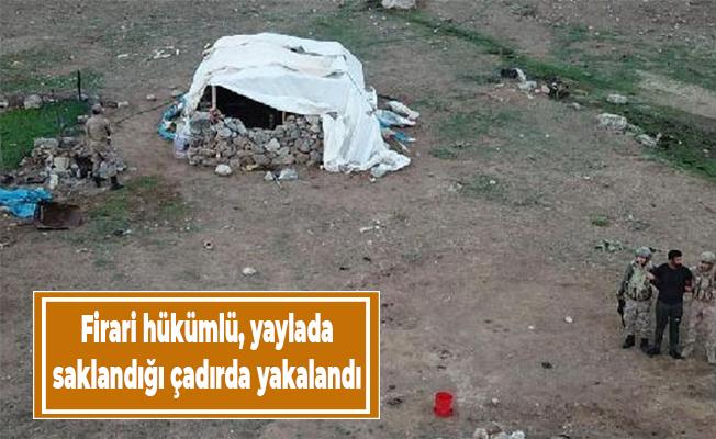 Firari hükümlü, yaylada saklandığı çadırda yakalandı