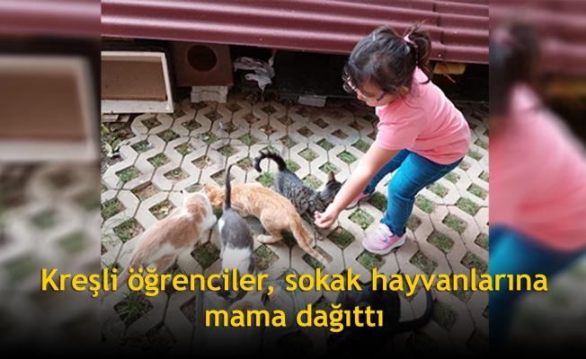 Kreşli öğrenciler, sokak hayvanlarına mama dağıttı