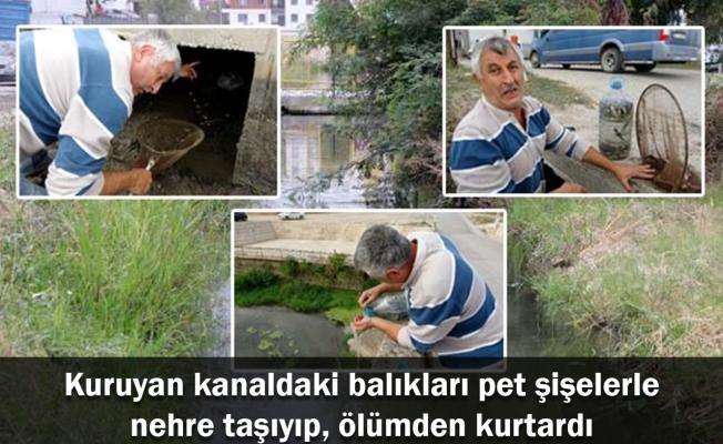 Kuruyan kanaldaki balıkları pet şişelerle nehre taşıyıp, ölümden kurtardı