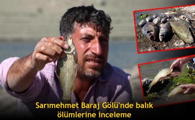 Sarımehmet Baraj Gölü'nde balık ölümlerine inceleme