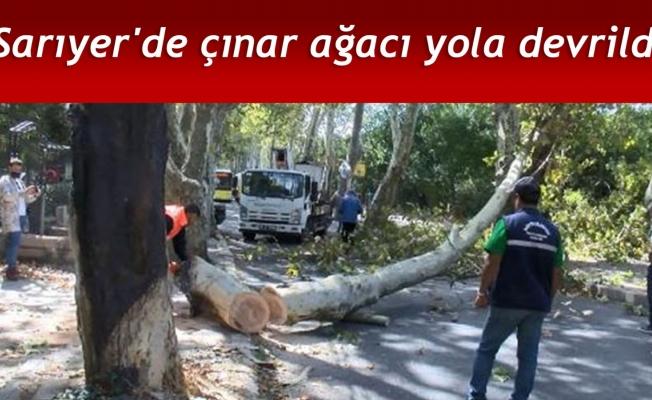 Sarıyer'de çınar ağacı yola devrildi