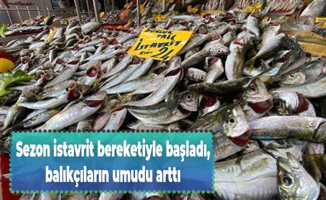 Sezon istavrit bereketiyle başladı, balıkçıların umudu arttı