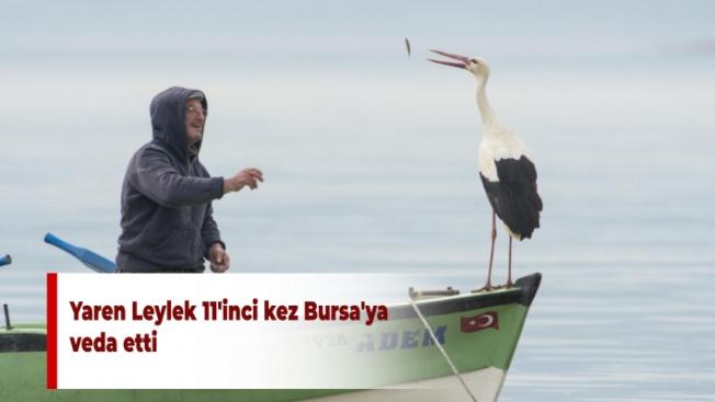 Yaren Leylek 11'inci kez Bursa'ya veda etti