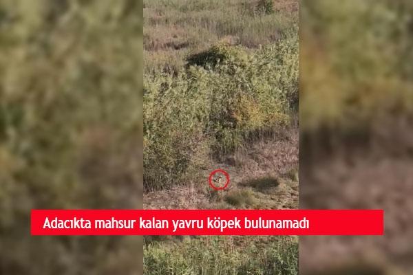 Adacıkta mahsur kalan yavru köpek bulunamadı