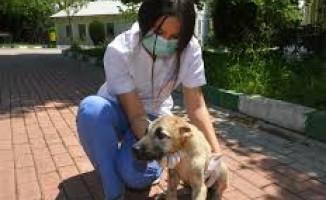 Bursa'da sahipsiz hayvanlara sağlık hizmeti