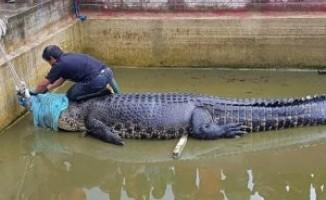 Timsah, havuza düşen kişiyi parçalayarak öldürdü