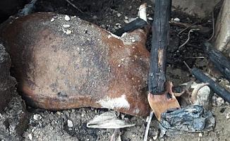 17 büyükbaş hayvan yanarak öldü!