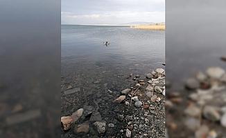 İznik Gölü'nde kirlilik sorunu giderildi!