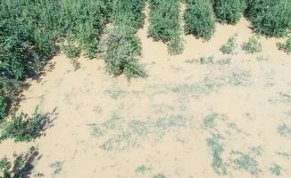 Bursa'daki sel tarım arazilerinide vurdu